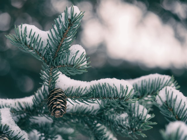 best winter plants