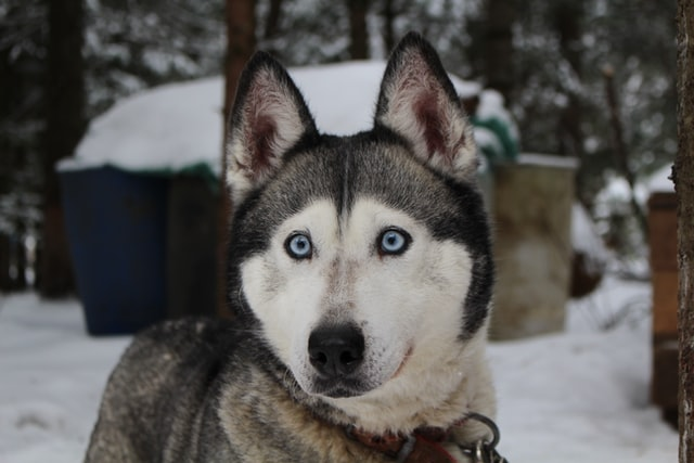 Dog houses in winter: insulation tips
