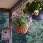Useful Tips for Caring For Begonia Winter Home