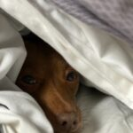 Tips for choosing, a bed for your dog