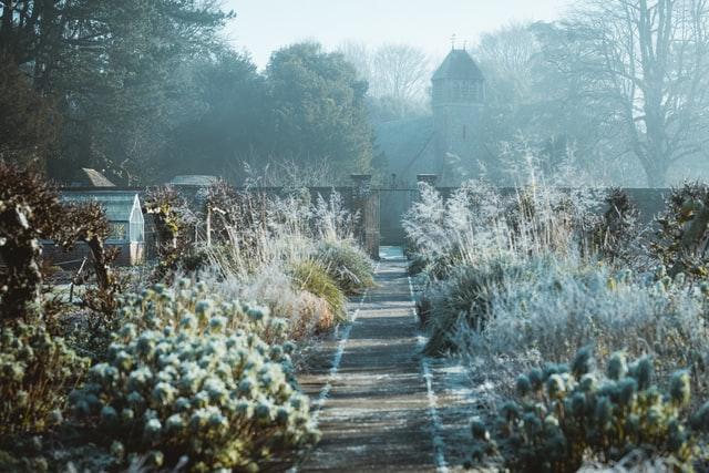 Garden in winter