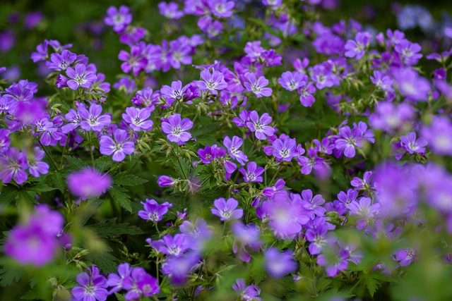 3 of the Easiest Garden Plants to Care For