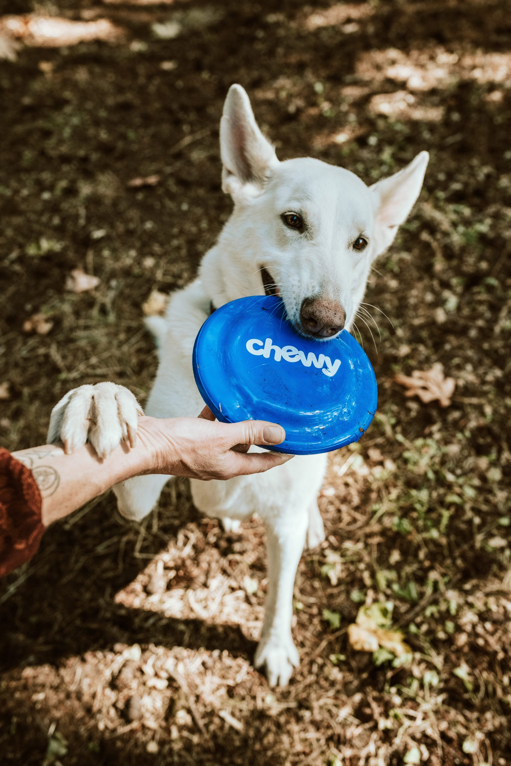 Toy that your Dog Fascinates